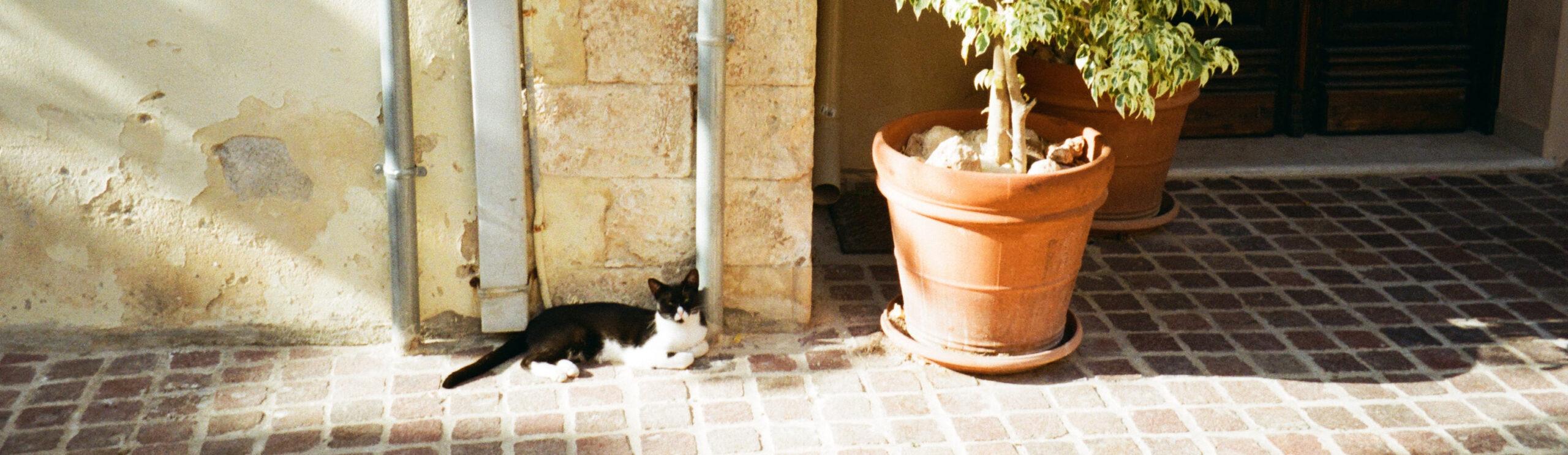 Kruka och katt i sol