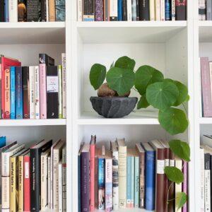 Stephania suberosa i bokhylla