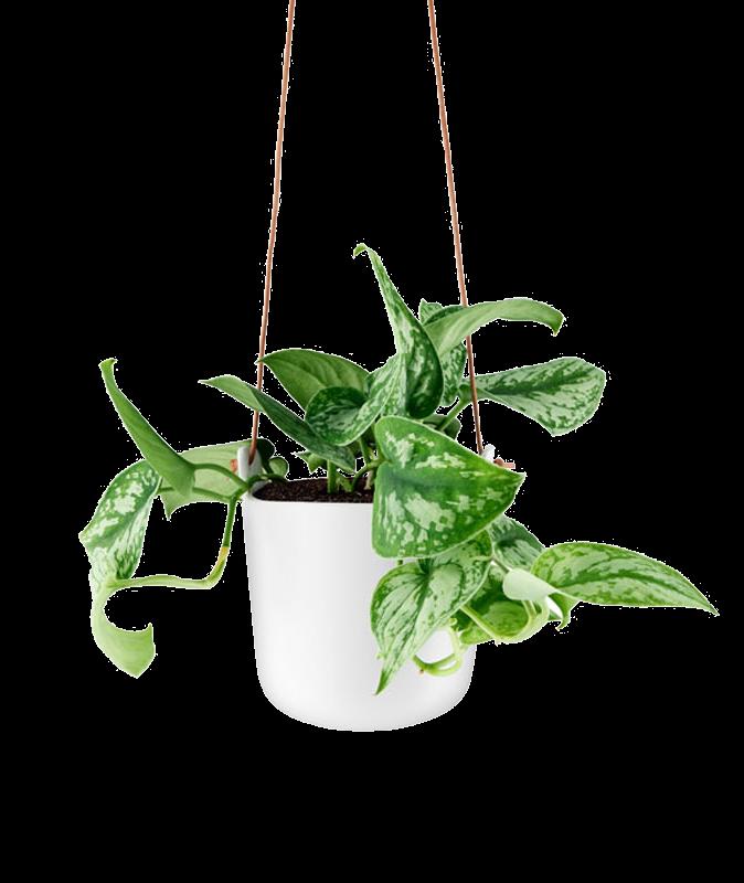 Orkidékrukor